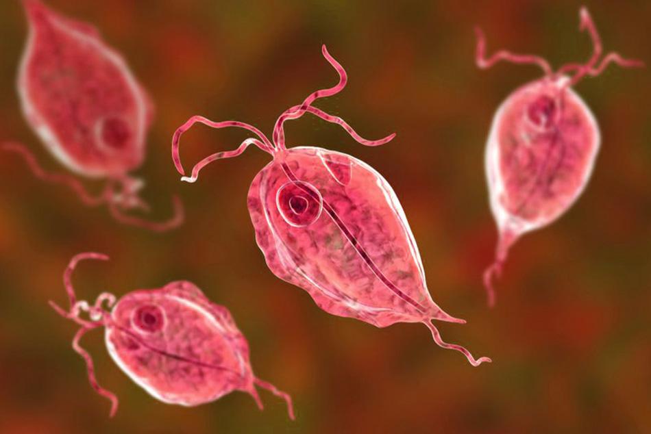 Viêm âm đạo do trùng roi Trichomonas